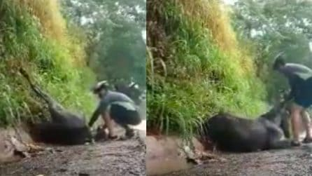 Cavallo accusa un malore, un ciclista di passaggio lo salva