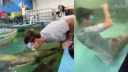 Giovane cade nella vasca di pesci affamati, attimi di tensione tra i presenti
