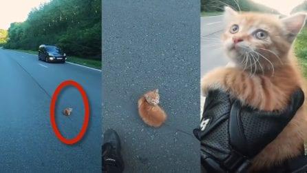 Gattino terrorizzato resta immobile in strada: salvato da un motociclista
