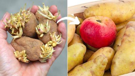 Come conservare alcuni alimenti in maniera corretta