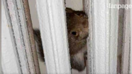 Torino, scoiattolo curioso rimane incastrato in un termosifone