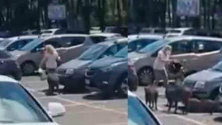 Roma, cinghiali accerchiano una donna e le scippano la spesa fatta al supermercato