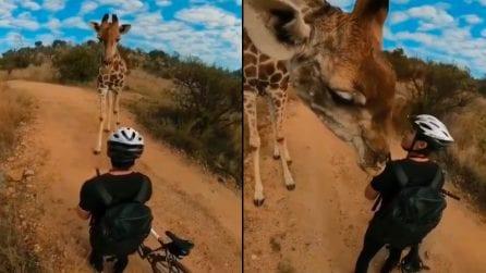 Incontro ravvicinato ed emozionante con una giraffa