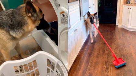 Anya, il cane che ama aiutare nelle faccende domestiche