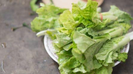Come conservare la lattuga: il semplice metodo