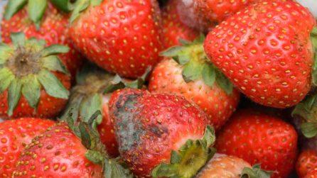 Come riutilizzare le fragole che stanno marcendo