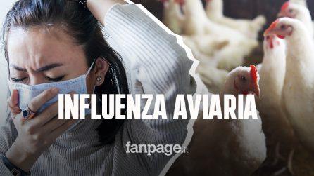 In Cina il primo caso umano di influenza aviaria H10N3, contagiato un 41enne di Jiangsu