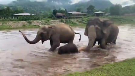 L'elefantino si tuffa per il bagnetto: quello che fa la madre è tutto da guardare