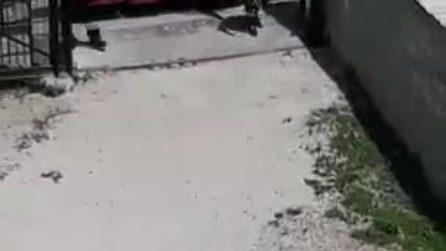 Incendio a Napoli, fiamme in un capanno con bombole di gas: evacuato edificio