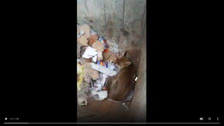 Netturbini salvano una volpe: era finita nel cassonetto dei rifiuti