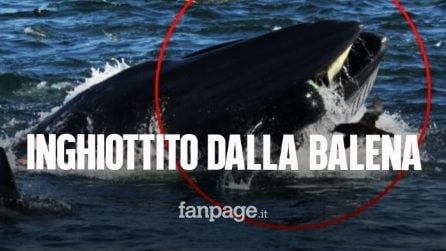"""Pescatore inghiottito intero da una balena: """"Era buio, ho pensato di morire"""""""