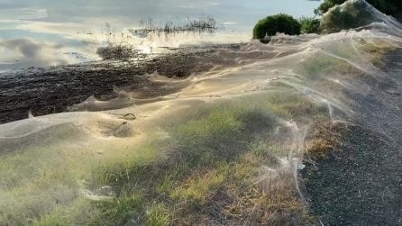 L'Australia è stata ricoperta di ragnatele da migliaia di ragni