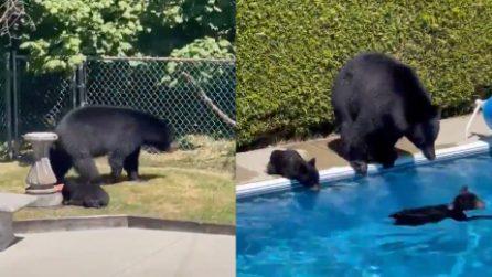Fa troppo caldo in Canada, gli orsi entrano in un giardino e fanno il bagno in piscina