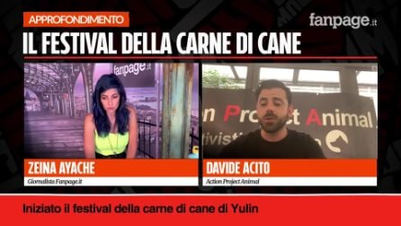 """Festival della carne di cane in Cina, Davide Acito: """"Salviamo tanti animali da una brutta sorte"""""""