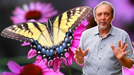 Benvenuti nella Casa delle Farfalle: un luogo di conservazione e tutela della biodiversità