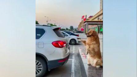 Il cane fa la manovra del parcheggio: l'auto si posiziona secondo le sue indicazioni