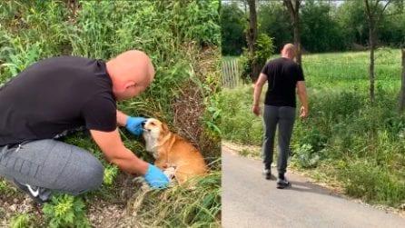Salva una cagnolina abbandonata, poi torna indietro a ricontrollare: il soccorritore si dimostra eccezionale