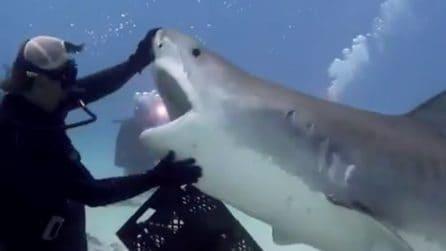 Un grande squalo si avvicina al sub e spalanca le sue fauci