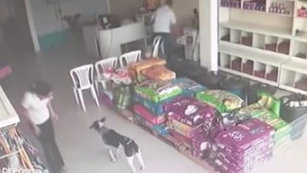 Cane ferito arriva da solo dal veterinario per chiedere aiuto