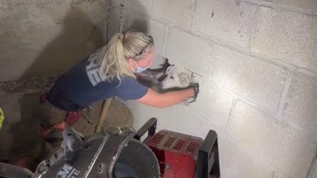 Cane resta intrappolato nel muro, salvato dai vigili del fuoco