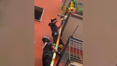Cane bloccato con la testa nel balcone, il salvataggio rischioso a Milano