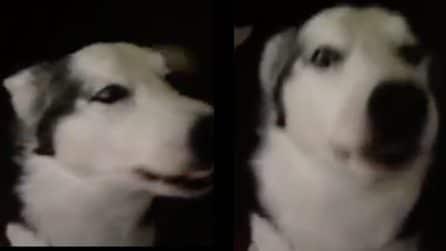 """""""Ti amo"""", la dedica d'amore del cane alla donna è bellissima"""