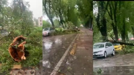 Maltempo, violento temporale a Vicenza: alberi sradicati