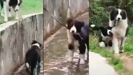 """""""Sono qui per aiutarti"""", il cucciolo soccorso dal suo amico"""