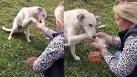Porta da mangiare a un cane affamato in strada: la reazione dell'animale è da brividi