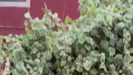 Maltempo in Veneto, nubifragio, grandine e forte raffiche di vento