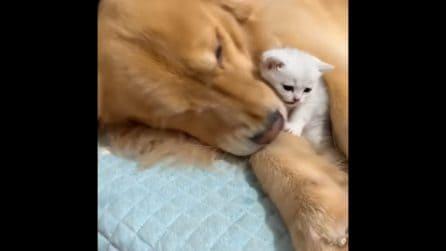 Mamma speciale per i gattini: una scena tenerissima