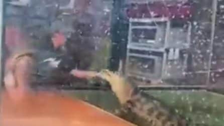 Alligatore morde il braccio dell'addestratrice e la trascina in acqua davanti allo sguardo dei bimbi