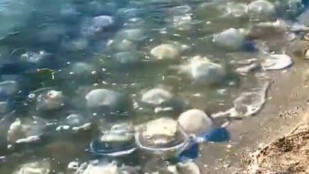 """""""Impossibile farsi una nuotata"""", il mare è pieno di meduse morte"""
