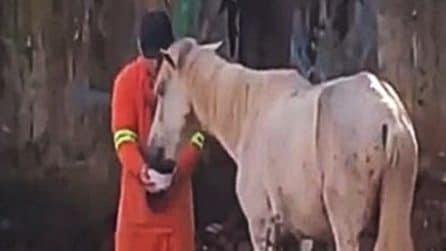 Il cavallo sembra stremato: lo spazzino corre in suo aiuto per dargli da bere
