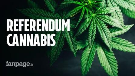"""Referendum cannabis, in un'ora 50mila firme per la legalizzazione. I promotori: """"Facciamo la storia"""""""