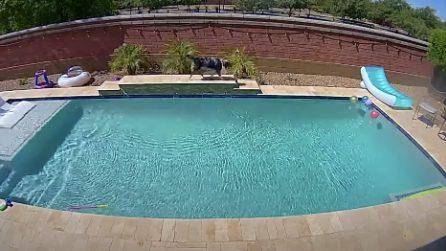La telecamera mostra cosa fa il cane quando la famiglia è fuori e in casa non c'è nessuno