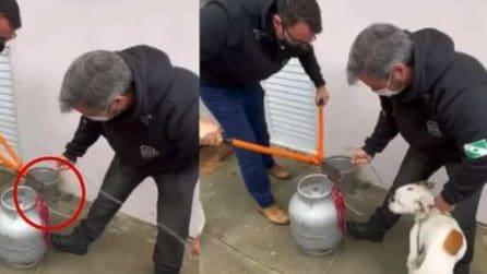 Cane incatenato a una bombola di gas viene liberato: i ringraziamenti dell'animale sono emozionanti