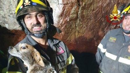 Resta intrappolata sotto un masso ed è in pericolo: beagle salvata dai vigili del fuoco