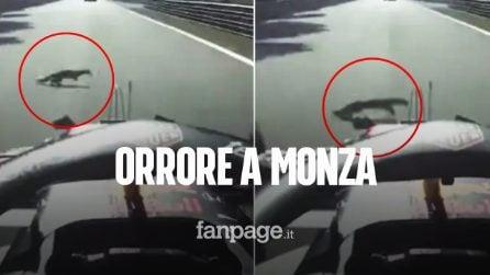 Orrore nel GP di Monza, Verstappen abbatte un animale in pieno rettilineo