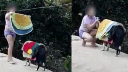 Ragazzina raccoglie il bucato e si fa aiutare dal cane per portarlo dentro: la scena è tenerissima