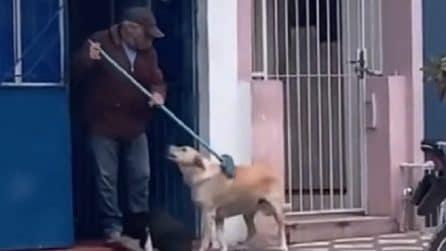 """Cani chiedono le coccole a un anziano che pulisce il marciapiede: lui li """"spazzola"""" con una scopa"""