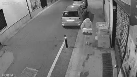 Abbandona sei gattini per strada: il video incastra una donna