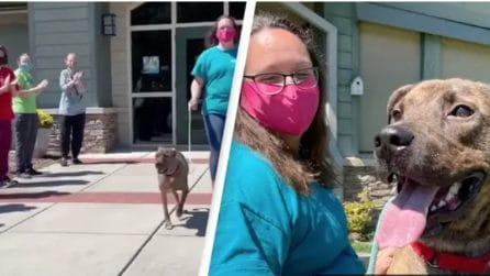 Standing ovation per Big Mac: il saluto commovente al cane del rifugio per animali