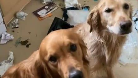"""""""Non siamo stati noi"""", rientra a casa e trova tutto in disordine: ma i cani provano a discolparsi"""