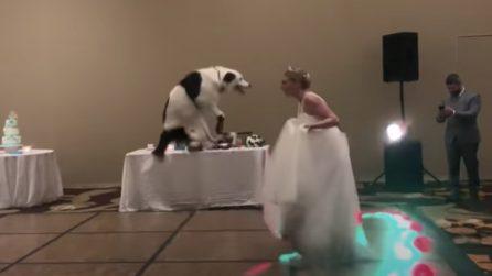 Non si separa dal suo cane nemmeno nel giorno del matrimonio e alla fine ballano insieme