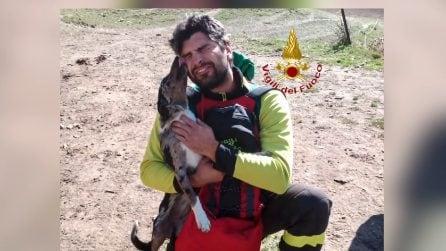 Cagnolina viene salvata e mostra la sua riconoscenza al pompiere