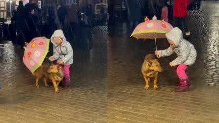 Bimba preferisce proteggere il suo cane dalla pioggia con il suo ombrellino