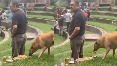 Il cane furbo e affamato che soffia il cibo all'uomo distratto