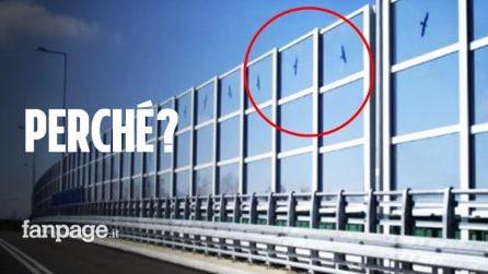 """Perché ci sono sagome di uccelli neri disegnate sui """"vetri"""" delle autostrade"""