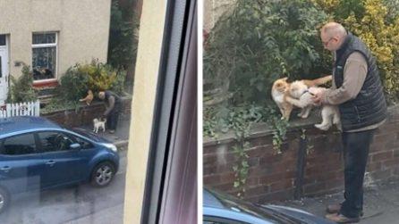 Una donna si affaccia alla finestra e filma una scena tenerissima